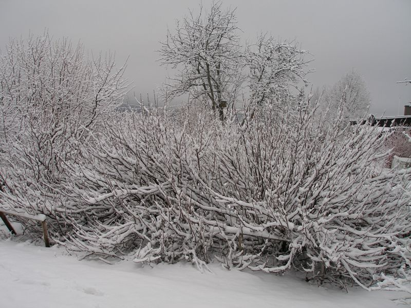 090216_vinter